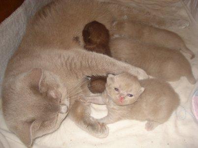 Voici  les 4 bébés a 2 semaines