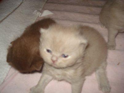Voici  les 4 bébés a 3 semaines trop mimi
