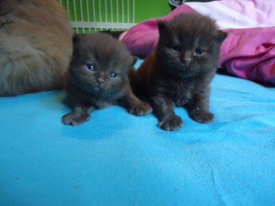 les chatons a 3 semaine
