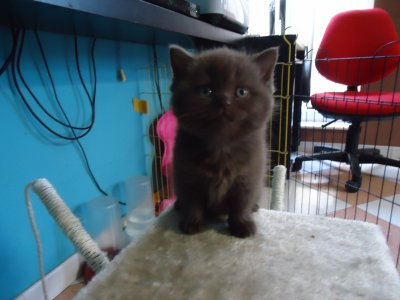 LES CHATONS A 6 SEMAINE