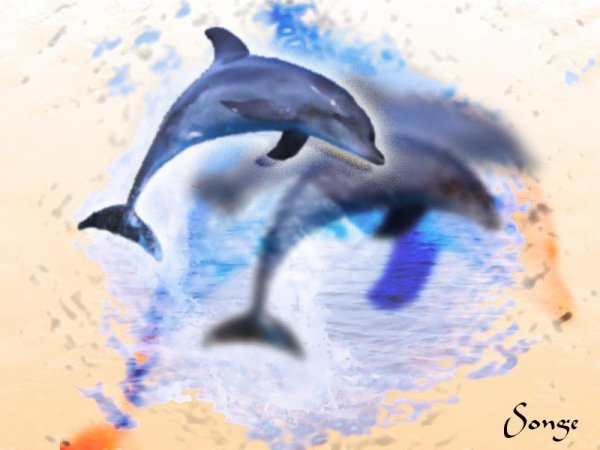 Dauphins8