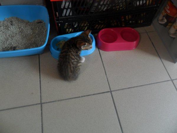 Felix & Minnie
