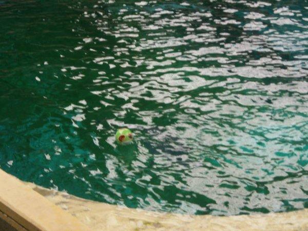 Boudewijn sea park