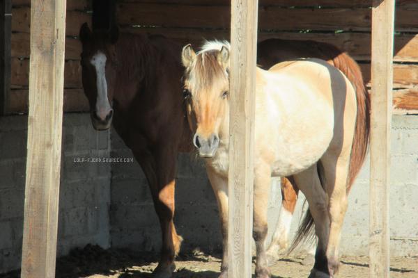 Journée du cheval!♥