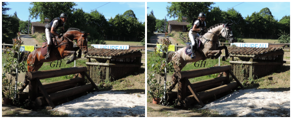 GreatHorse, Blog Star ♥