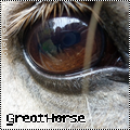 Photo de GreatHorse