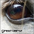 Photo de GreatHorse