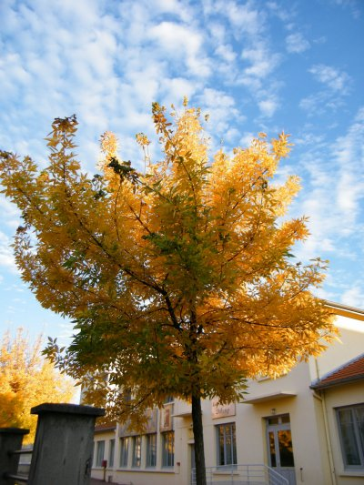 Belle couleur d'AUTOMNE à IZIEUX (PILAT)et couleur du printemps