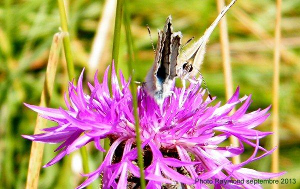 Le Septembre des Papillons dans PILAT