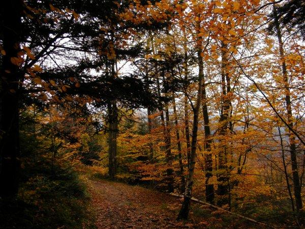 balade automne entre SCIE du BOST et la CHAUMETTE