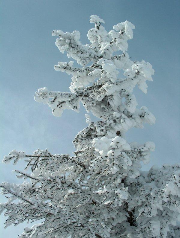 Le soleil , la neige , le givre , la Vie en Hiver dans PILAT
