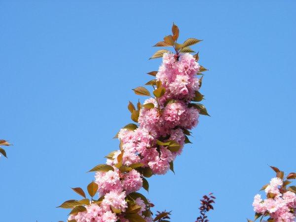 Les Fleurs qui vivent quelques jours dans notres massif