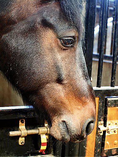 Mon poney c'est pas un poney de grand prix, loin de là ...♥ & t'sais quoi? Osef.