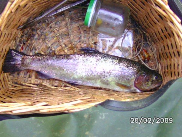 quelle que poisson pêcher dan ma seson 2012