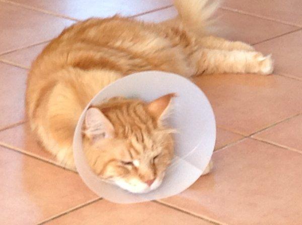 .je lui souhaite un prompt rétablissement.... Oliver - Leetchi.com