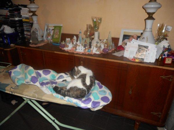 inquiet demain  je serait absent une partie de  l apres midi et de la soiree je serait chez le veterinaures inquiets pour  zoe