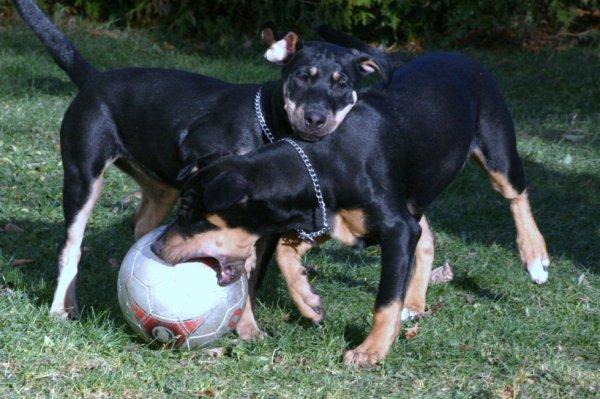 Mes dooudounes jouent au Soccer