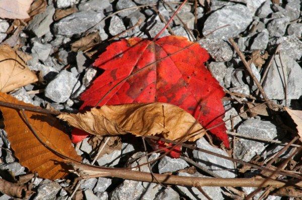 belle couleur d'automne
