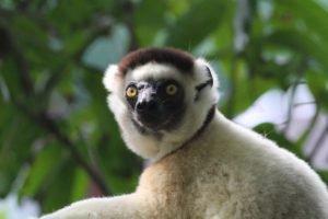Les touristes en croisière de Madagascar