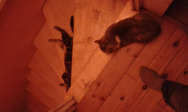 Mes bebes chats