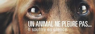STOP A LA MALTRAITANCE DES ANIMAUX!!!