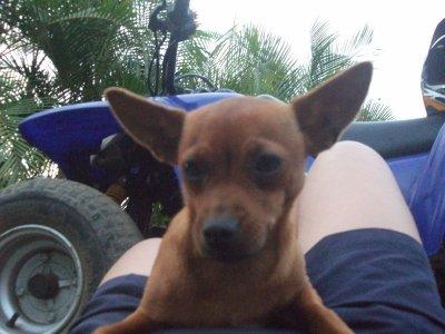 mon chien Toupie