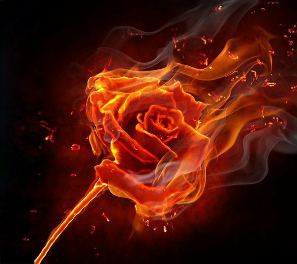 """Résultat de recherche d'images pour """"rose et flamme"""""""