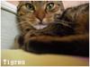 Mon-petit-chat-sauvage