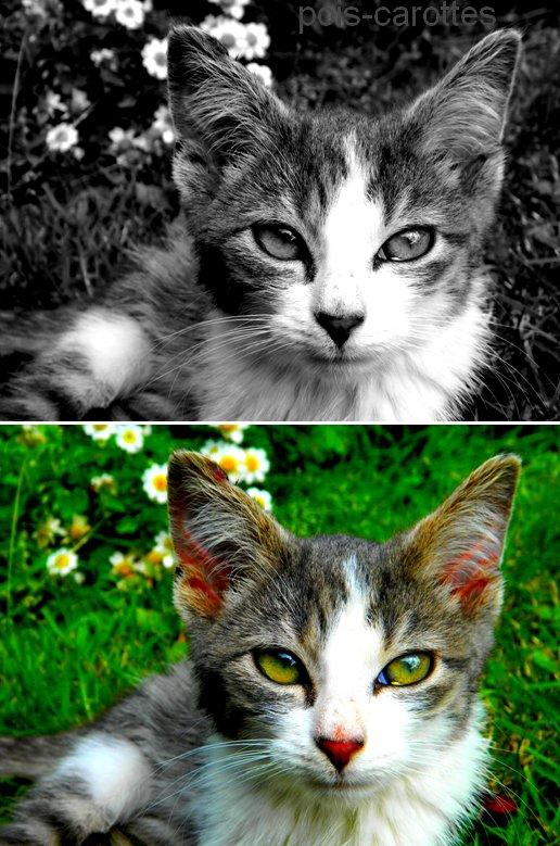 Miaouu