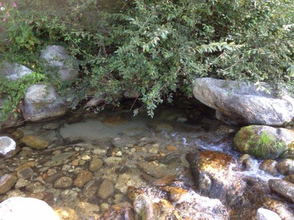 Truite carpe et saumon de fontaine