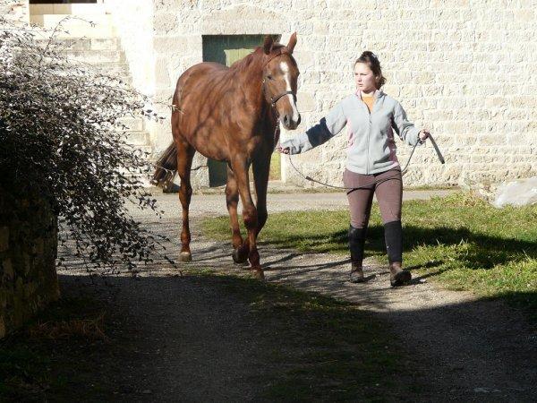 Les chevaux partis loin