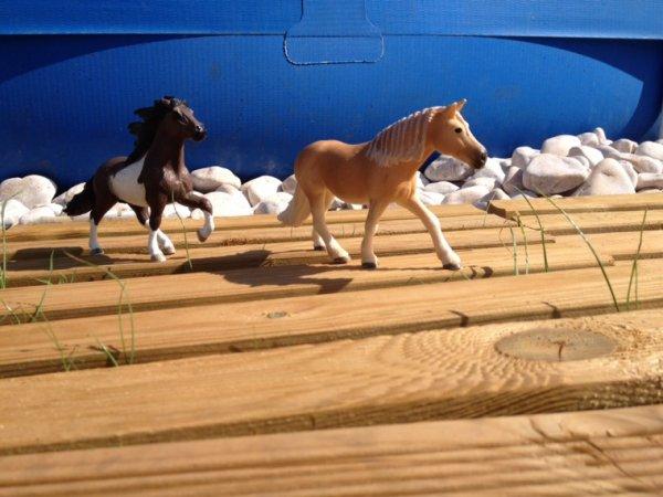 Les deux poney!