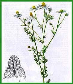 PLANTES MEDICINALES USAGE VETERINAIRE