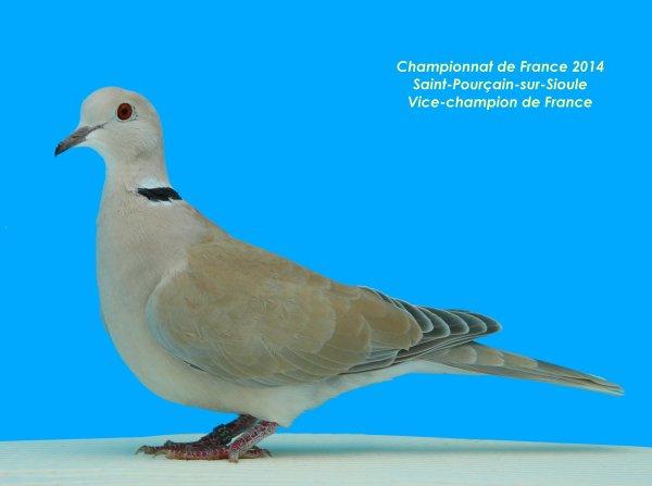 Championnat de France 2014 à Saint-Pourçain sur Sioule (03)