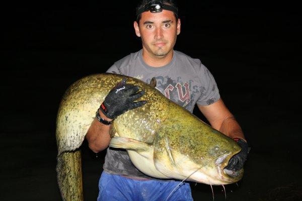 Record année 2012 et 2013 tout poisson