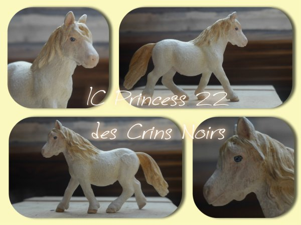 IC Princess 22 des Crins Noirs