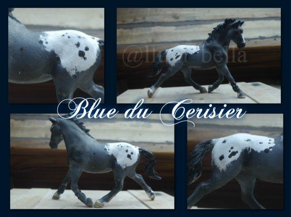 Blue du Cerisier