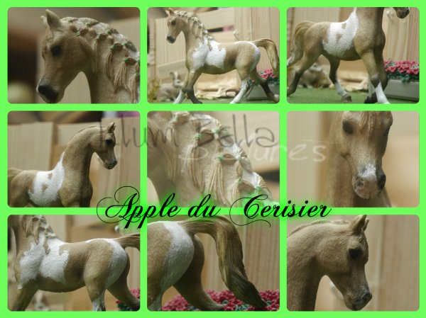 Apple du Cerisier