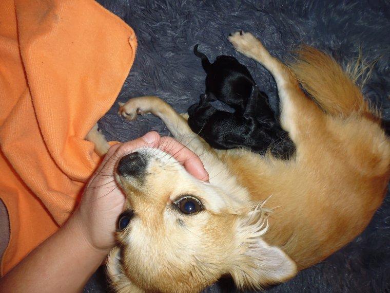 maman  lilou  et  papa  louka  son content  leur  petit son  là  1 fille  et  deux garçon