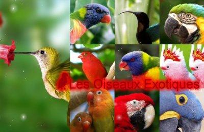 les oiseaux du monde !