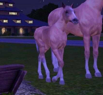 les poulain née au Triple h ranch