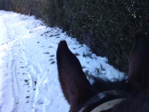 entre les oreilles de son cheval