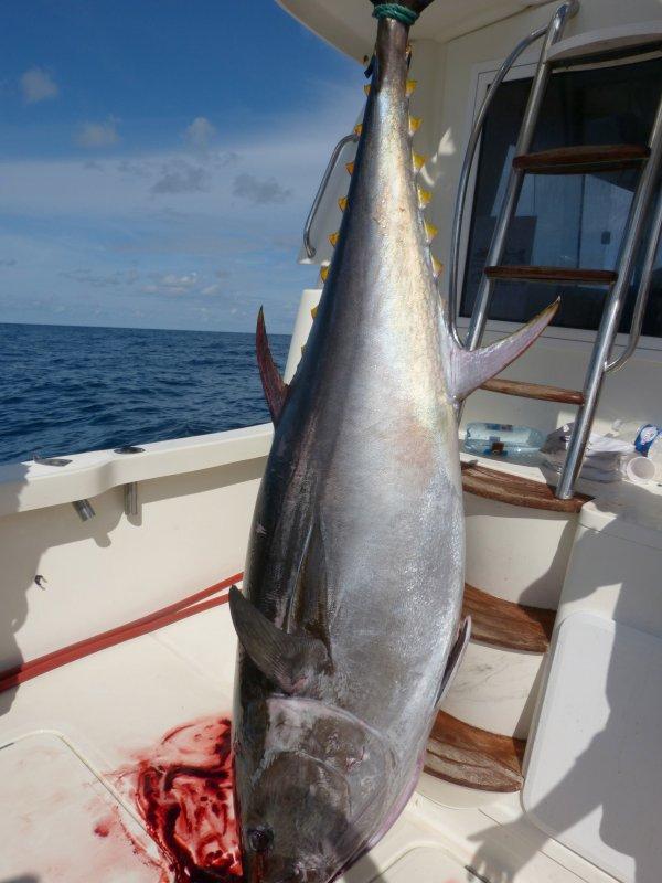 thon rouge le record du bateau explose