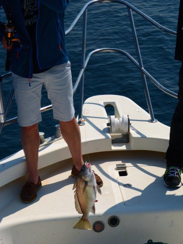 pêche sur epaves