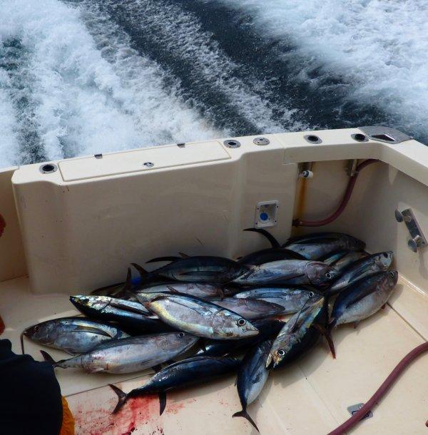que du beau poisson 10 a 12 kg