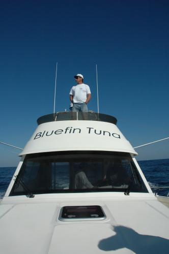 bluefintuna peche aux thons