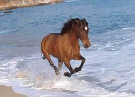 Un cheval sur la plage