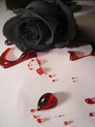 La rose noir