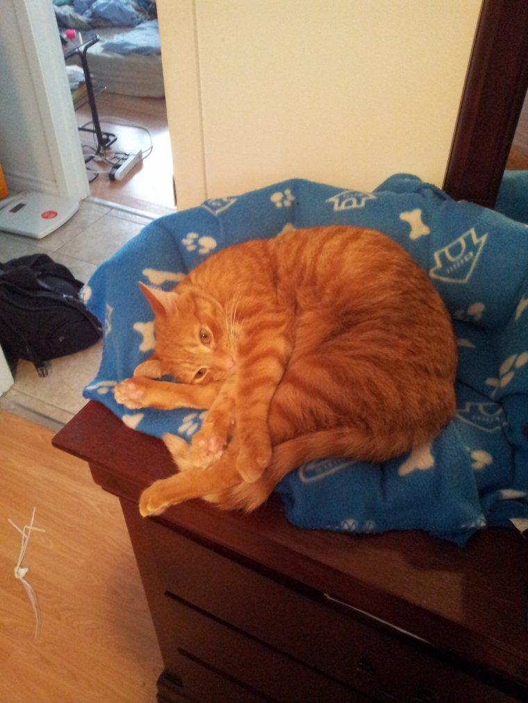 Voici encore mon chat adoré:)