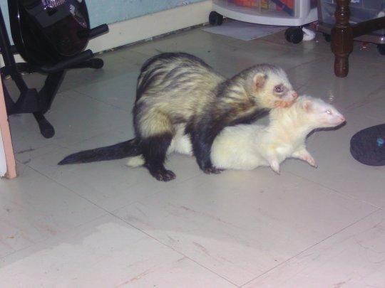 Big Loulou et Dorie: